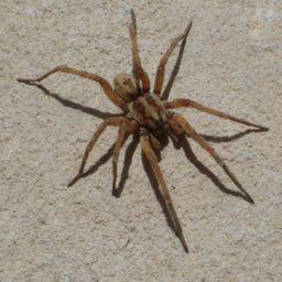 Уничтожение пауков в Камызяке